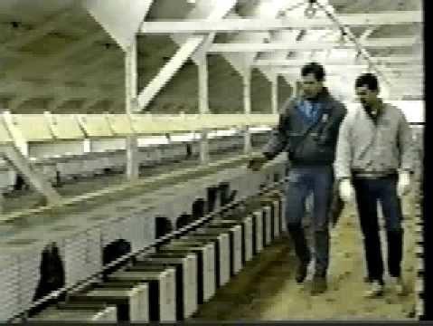 L'éthique des animaux à fourrure