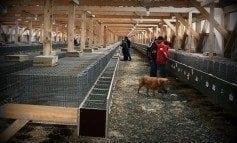 Lignes directrices sur les soins et la manipulation des animaux à fourrure d'élevage