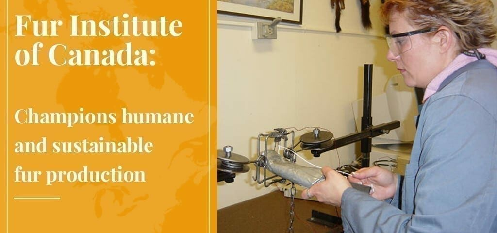 Fur Institute of Canada Champions Humane and Sustainable Fur Production – Truth About Fur Blog Highlight