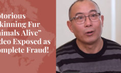 "Notorious ""Skinning Fur Animals Alive"" Video Exposed as Complete Fraud! - Truth About Fur Blog Highlight"