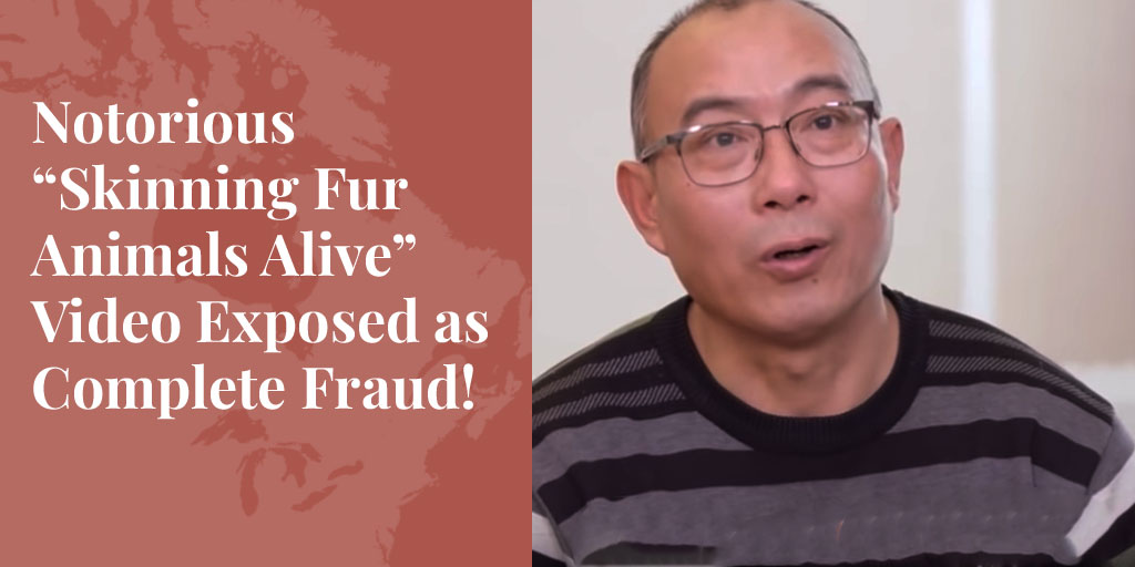 "Notorious ""Skinning Fur Animals Alive"" Video Exposed as Complete Fraud! – Truth About Fur Blog Highlight"