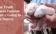 The Truth About Fashion Part 1: Going to the Source - Truth About Fur blog highlight