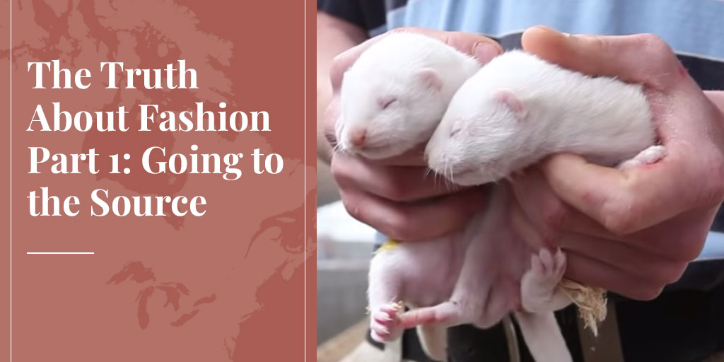 The Truth About Fashion Part 1: Going to the Source – Truth About Fur blog highlight