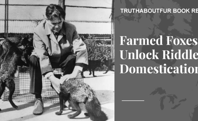 Farmed Foxes Unlock Riddle of Domestication - Truth About Fur blog highlight