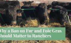 Why a Ban on Fur and Foie Gras Should Matter to Ranchers - Truth About Fur blog highlight