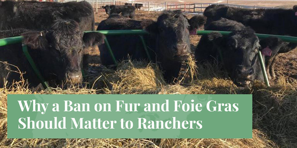 Why a Ban on Fur and Foie Gras Should Matter to Ranchers – Truth About Fur blog highlight