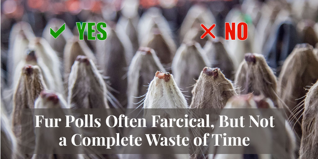 ICYMI – Truth About Fur Blog Highlight – Fur Polls Often Farcical, But Not a Complete Waste of Time