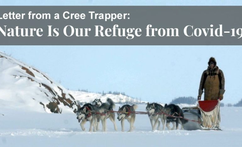 Letter from a Cree Trapper: Nature Is Our Refuge from Covid-19 - Truth About Fur Blog Highlight