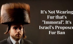"""Truth About Fur blog Highlight - It's Not Wearing Fur that's """"Immoral"""". It's Israel's Proposed Fur Ban"""