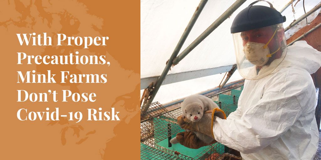 Truth About Fur Blog Highlight – With Proper Precautions, Mink Farms Don't Pose Covid-19 Risk