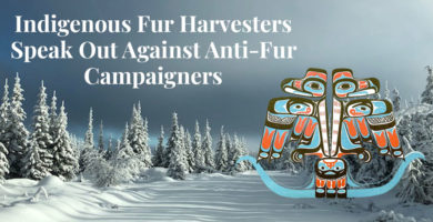 Truth About Fur Blog Highlight - Indigenous Fur Harvesters Speak Out Against Anti-Fur Campaigners