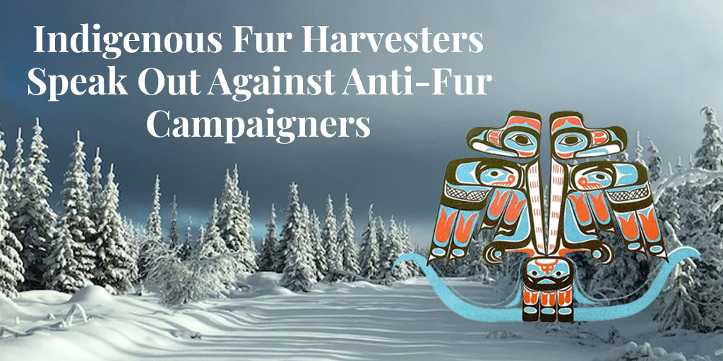 Truth About Fur Blog Highlight – Indigenous Fur Harvesters Speak Out Against Anti-Fur Campaigners