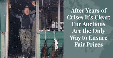 Truth About Fur Blog Highlight - Fur Auctions Are the Only Way to Ensure Fair Prices