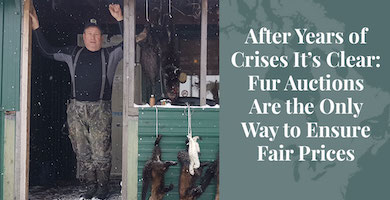 Truth About Fur Blog Highlight – Fur Auctions Are the Only Way to Ensure Fair Prices