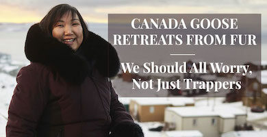 Canada Goose Retreats from Fur
